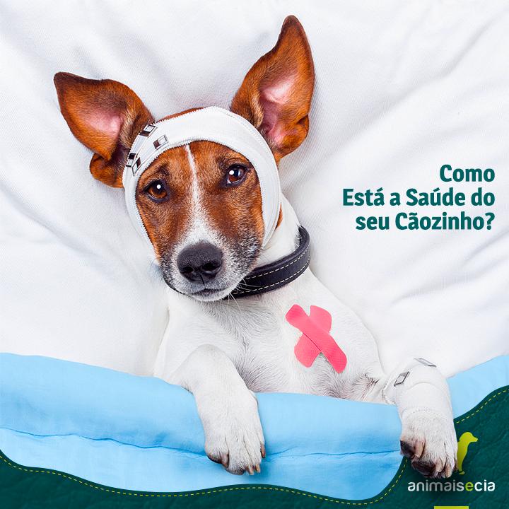 Animais e Cia Pet Shop e Consultório Veterinário